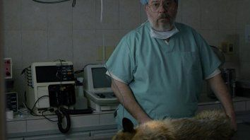 El actor Guillermo Arengo interpreta un veterinario acusado de maltrato animal en las redes sociales. Su vida tranquila de clase media se desmorona a partir de la muerte accidental de un perro.