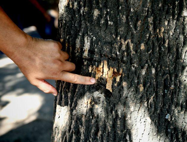 Un vecino muestra los rastros de la balacera. (Foto:C.Mutti)