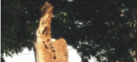 Decapitaron a la Virgen del tronco que convocaba multitudes en Venado Tuerto