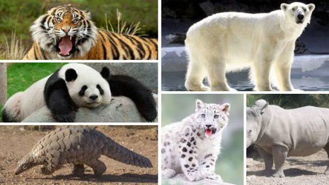 Alerta, Tierra: unas 5,200 especies están en peligro de extinción