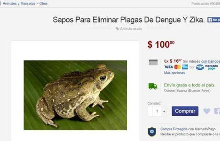 Vendía por internet un método para erradicar el dengue a sólo cien pesos: un sapo