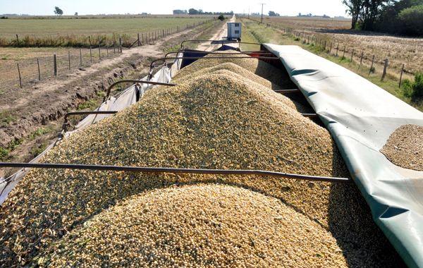 Bajo presión. La campaña de soja se desarrolló en un clima cambiante. Exceso de humedad primero y seca después.