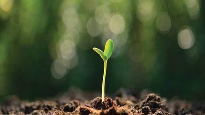 Los polifenoles son sustancias que las plantas producen para su propia defensa. Existen más de 10.000 con diferentes funciones.