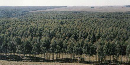 México quiere sembrar nueve millones de árboles en un solo día