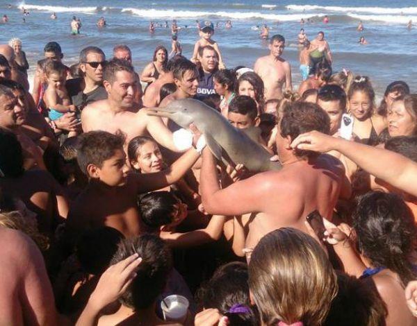 Los turistas se sacaron fotos con el pequeño delfín y el animal a los pocos minutos murió.