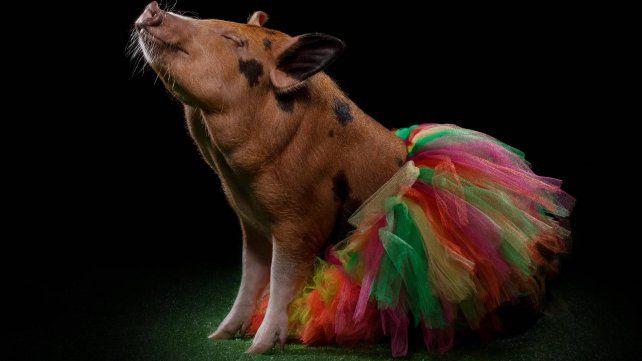 Cuál es la estrella en la nueva tendencia en adopción de mascotas exóticas