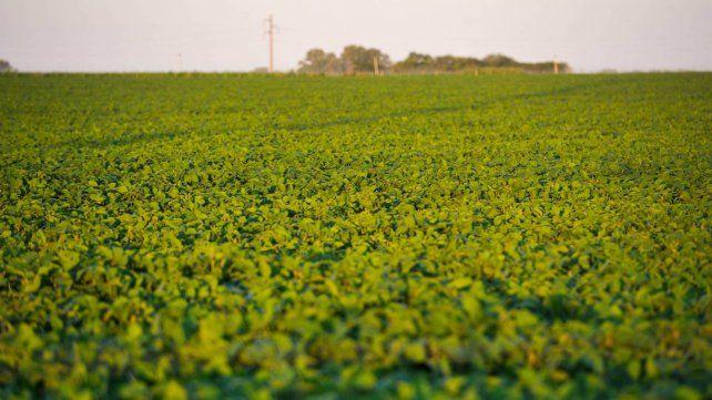 El contrato de la soja julio cayó u$s 4