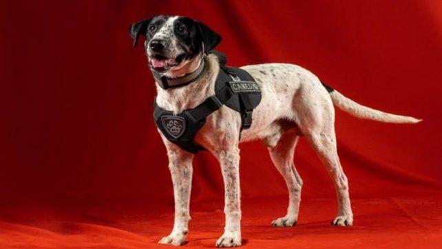 Falopa, el particular nombre de uno de los canes de la policía de Jujuy