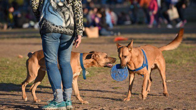 El cuidado de las mascotas es prioritario en estas fiestas de fin de año.