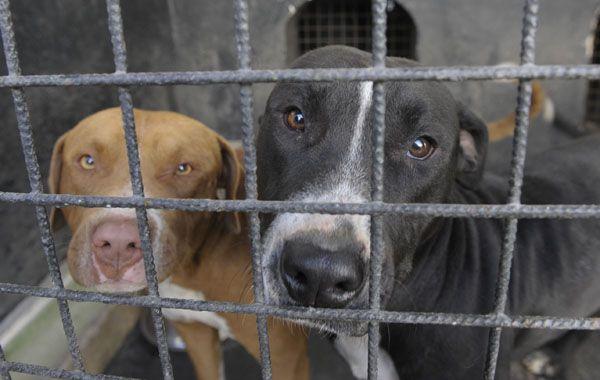 Varias organizaciones reclaman un espacio sanitario adecuado para mascotas en estado deplorable.