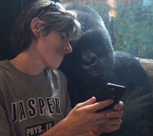 El gracioso gorila estuvo un buen rato a mirando las fotografías que un joven le enseñaba con su móvil.