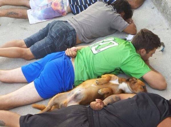 El perro de los delincuentes detenidos se acostó junto a ellos cuando fueron esposados por la policía.