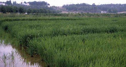 Islas entrerrianas: No se violará ninguna reglamentación ambiental