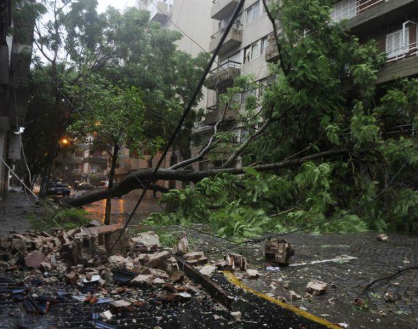 En Montevideo al 600 un gran ejemplar quedó atravesado en la calle.