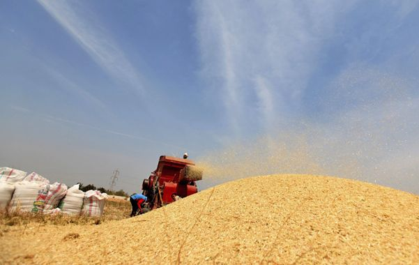 Intenciones. La cámara que nuclea a la cadena de maíz saludó como positiva la medida anunciada por el gobierno.