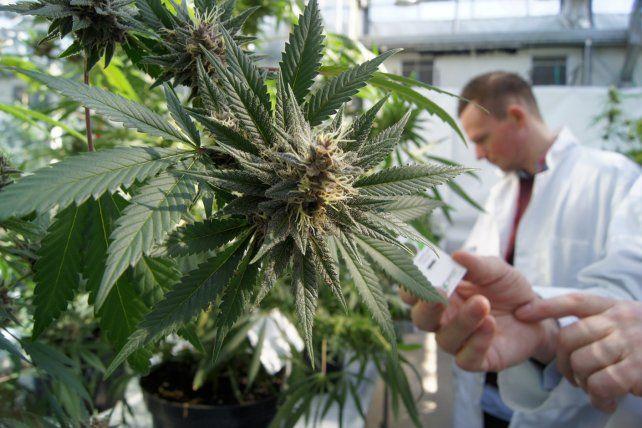 La provincia estimó que podría producir cannabis para uso medicinal a fin de año