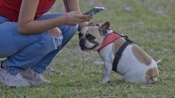 Hay cachorros por los que se llegan a pagar hasta 40 mil pesos.