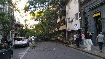 Un gran árbol cayó en el microcentro rosarino y quedó cortado el tránsito