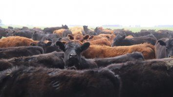 Gustos. El IPCVA observa mucho potencial para la carne argentina en las ciudades chinas de alto poder adquisitivo.