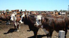El Usda estima que por la baja de precios, las exportaciones de carne vacuna argentina caerán un 5% en 2021.