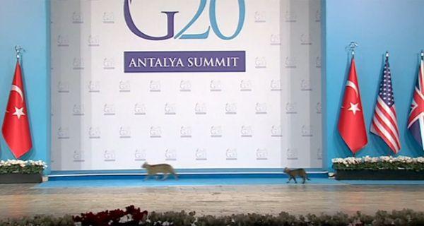 Tres gatos evaden las medidas de seguridad del G-20 y se pasean por el escenario