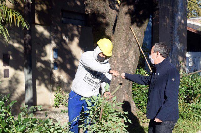 El plan de poda municipal alcanzará a 40 mil árboles en toda la ciudad