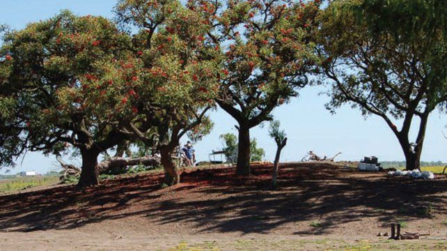 Cerritos. El nombre se debe a los montículos de tierra construidos por los indígenas del delta del Paraná.