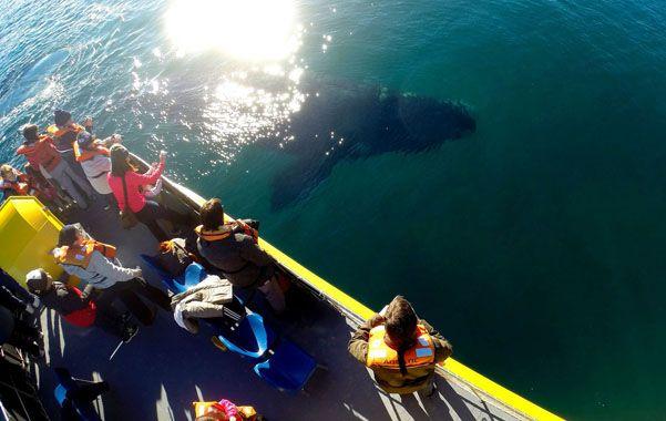 Impactante. El encuentro cercano con los grandes animales asombra a los visitantes.