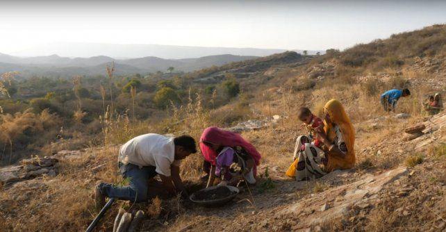 Por cada niña que nace, la familia se compromete a plantar y cuidar 111 árboles que recuperaron la fauna y la flora del lugar y se establece un depósito mínimo de dinero destinado a la dote.