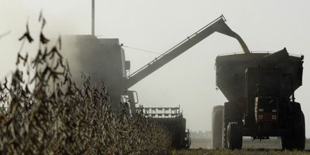Crece la tensión: los camioneros no trasladarán los granos a las acopiadoras