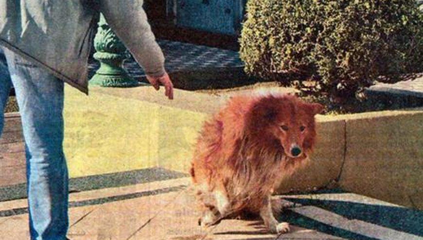 Al ingreso del cementerio. Calculan que el perro tenía entre 12 y 14 años.