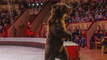 Oso ataca a su entrenadora en un show circense de Rusia