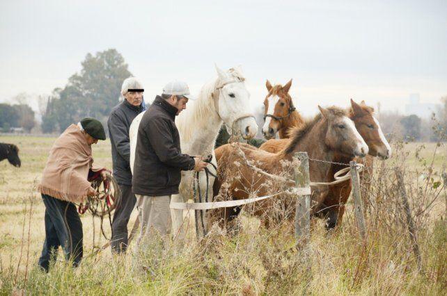 Los animales sueltos, sobre todo caballos, es una preocupación de muchos vecinos de distintos barrios de la ciudad.