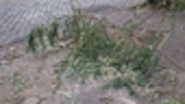 Tablada. El vehículo fuera de control subió a la vereda este domingo y partió un árbol