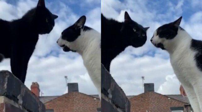 Los gatos hablaron en una cerca en Inglaterra y el video se hizo viral.