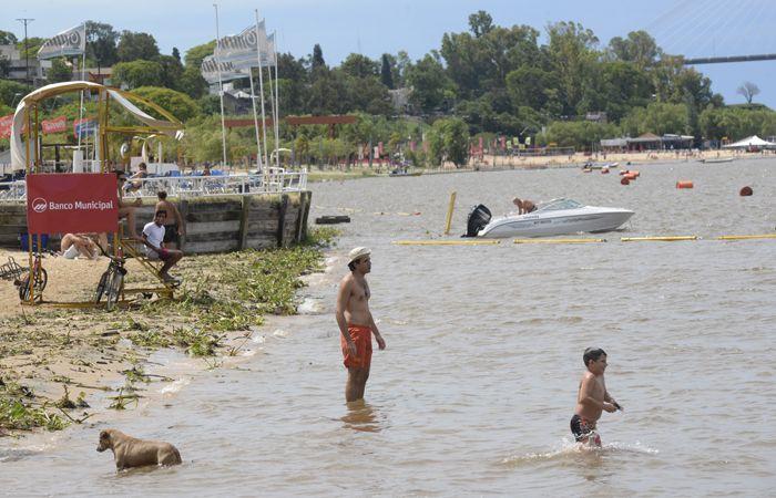 La llegada de camalotes a la costa rosarina anuncia la crecida del rio. (Foto: S. Salinas)