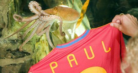 Paul, ídolo en la ciudad española donde se celebra la Fiesta del Pulpo