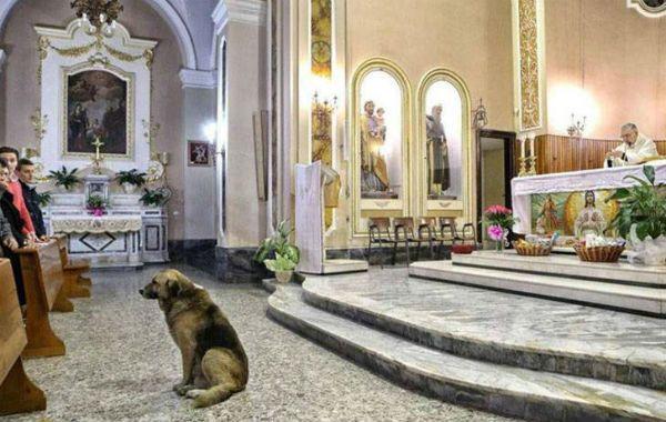 Fiel. El pastor inglés Ciccio en la parroquia del pueblo de San Donaci.