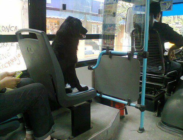 El proyecto sostiene que las mascotas deben viajar en receptáculos para animales de hasta 8 kilos.