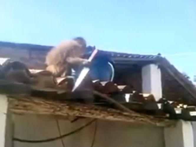 Un mono con un arma blanca causó pánico en un pequeño pueblo brasileño.