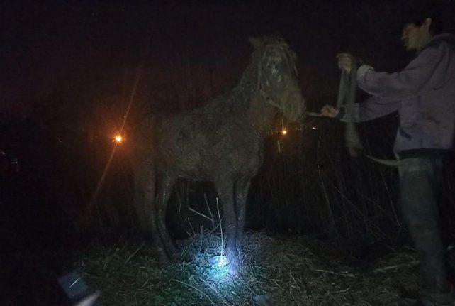 El caballo tras ser rescatado en una zona rural sin luz alguna en Bulevar Seguí y Las Palmeras