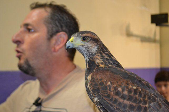 La pájara, Maria Emilia, junto a su instructor; el cetrero venadense Mauro Príncipe