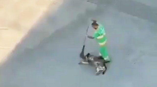 Un barrendero colombiano acaricia a un perro con su escoba.