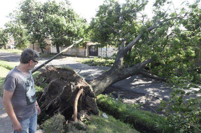 Una mujer murió al caer un árbol sobre su casa en medio del fuerte temporal