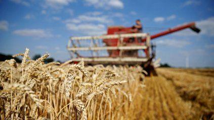 Las condiciones de humedad y los buenos precios favorecen al cereal fino.