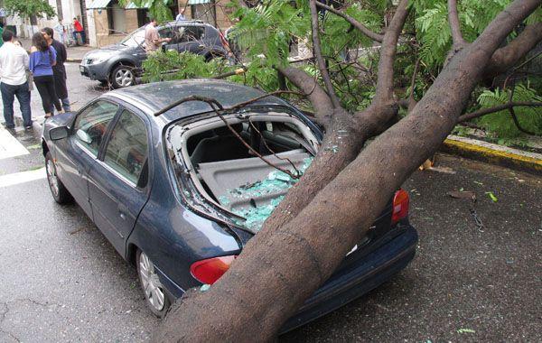 Desgracia con suerte. El árbol se cayó justo cuando el auto pasaba por el lugar. El conductor salió ileso. (Foto: Angel Amaya)