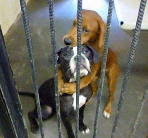 La fotografía del abrazo entre Kala y Keira se viralizó en las redes.