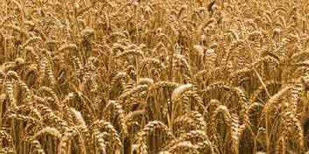 La constante suba de los alimentos hasta 2017 causará hambruna en todo el mundo