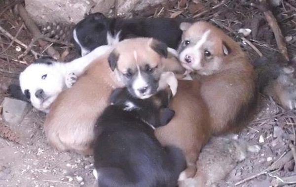Los cachorros recién nacidos fueron tirados en un contenedor.