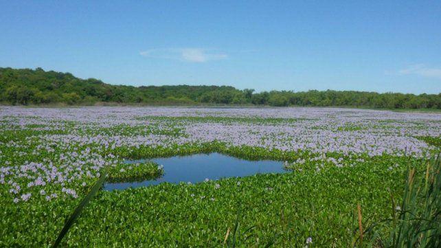 La biodiversidad del Parque Nacional lo convierten en un ecosistema privilegiado.